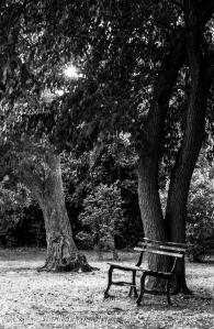 Halcomb Garden